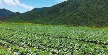 海南同德成功与广西蔬菜基地签下长期蔬菜保供合同